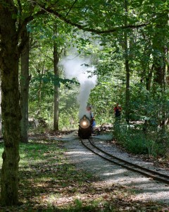 Live Steam in the Forest