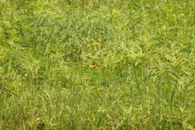 Modeling Nature with Static Grass